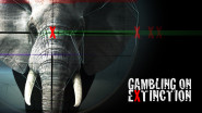 GAMBLING on EXTINCTION horizontal-2a